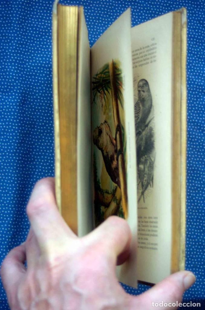 Libros antiguos: HISTORIA NATURAL. DOCTOR C. CLAUS. TOMO VI- Zoologia V. Traducción Luis de Góngora - Montaner Simón - Foto 6 - 268955024