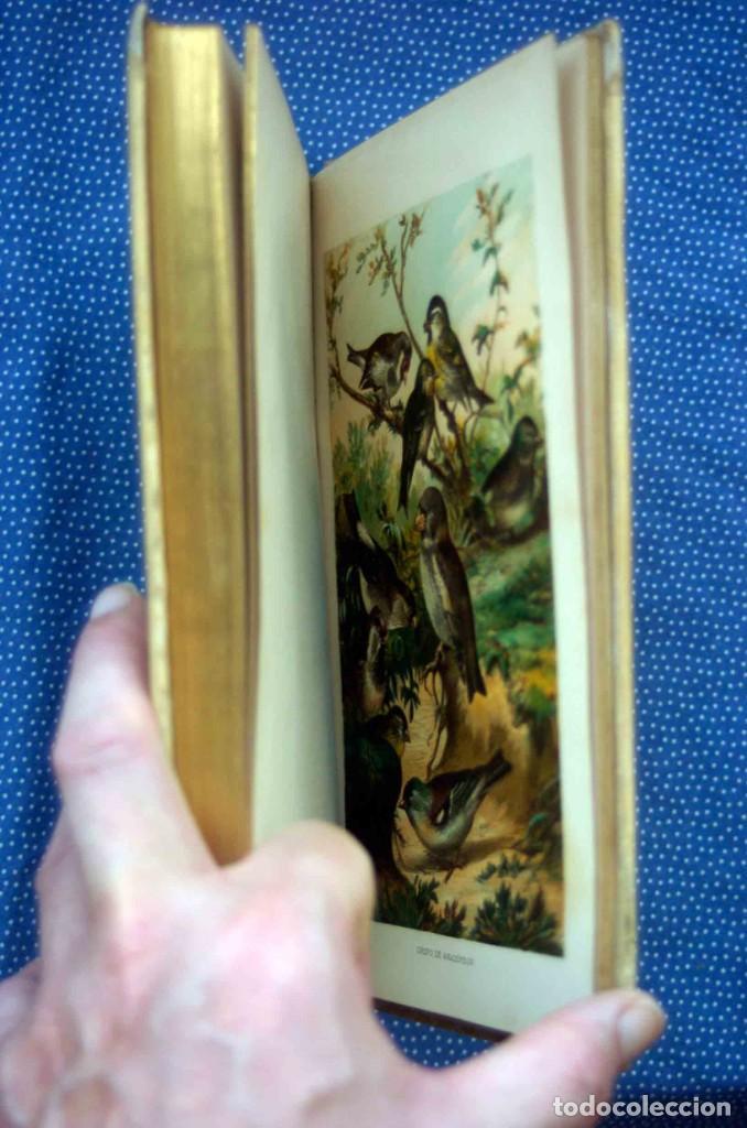 Libros antiguos: HISTORIA NATURAL. DOCTOR C. CLAUS. TOMO VI- Zoologia V. Traducción Luis de Góngora - Montaner Simón - Foto 7 - 268955024