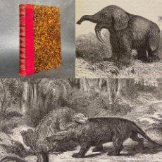 Libros antiguos: 1864 - LA TERRE AVANT LE DÉLUGE - LA TIERRA ANTES DEL DILUVIO - HISTORIA DE LOS DINOSAURIOS - CREACI. Lote 289211103