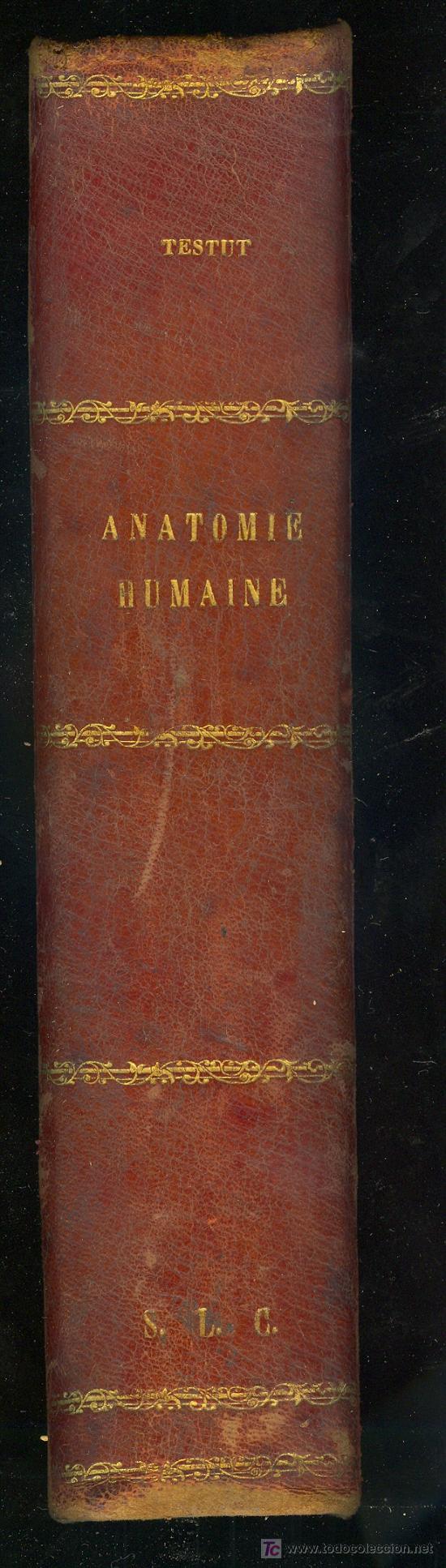 Libros antiguos: MEDICINA. TRAITE DANATOMIE HUMAINE PAR L. TESTUT. 3ª ED. PARIS OCTAVE DOIN EDITEUR 1895 TOME 3 - Foto 2 - 12850941