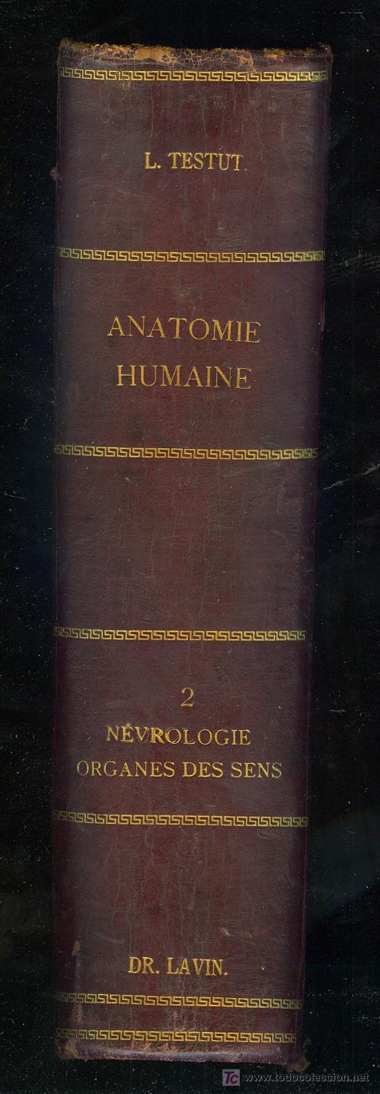 Libros antiguos: MEDICINA. TRAITE DANATOMIE HUMAINE PAR L. TESTUT. 3ª ED. PARIS OCTAVE DOIN EDITEUR 1897 TOME 2 - Foto 2 - 16844811