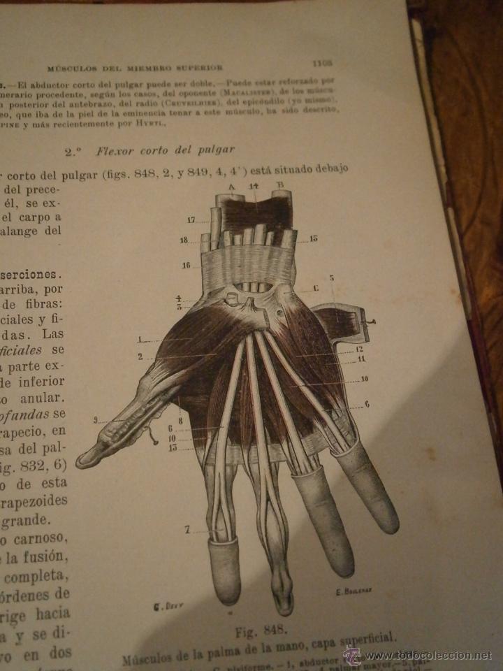 tratado de anatomía humana. tomo primero, 1921. - Comprar Libros ...