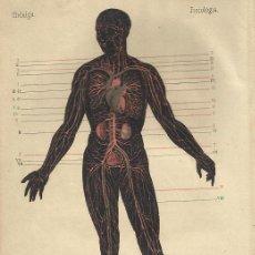 Libros antiguos: 1883 - NOCIONES DE FISIOLOGÍA E HIGIENE - GONZÁLEZ HIDALGO, JOAQUÍN. Lote 39423220