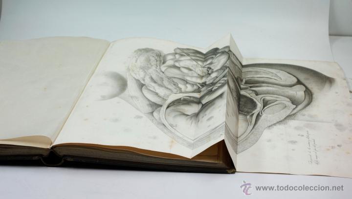Libros antiguos: Nuevas demostraciones de los partos, con 80 estampas, J.L. Maygrier. París, Méjico, 1828. 27x41 cm. - Foto 2 - 41586318