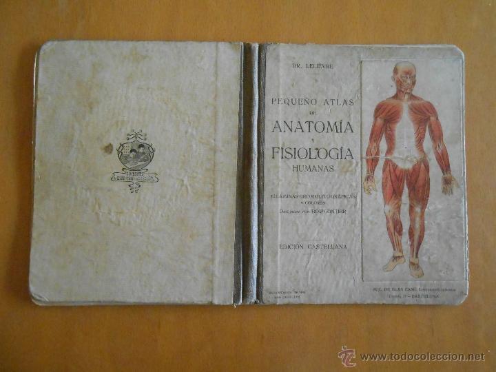 pequeño atlas de anatomia y fisiologia humana. - Comprar Libros ...