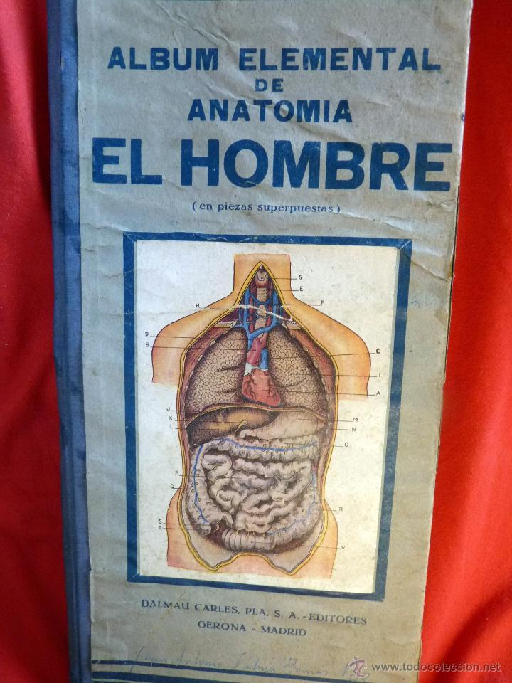 maravilloso album de anatomia el hombre, dalmau - Comprar Libros ...