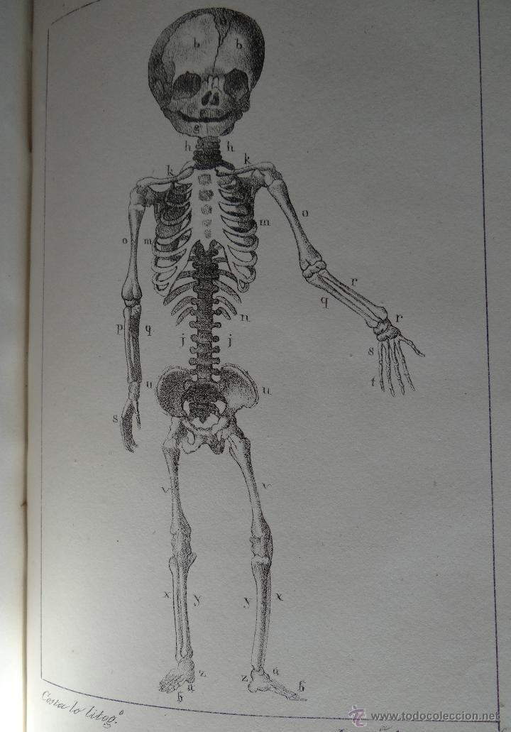 Libros antiguos: CURSO COMPLETO DE PARTOS POR JULIO HATIN . MADRID 1.835 (1ª EDICION) TOMO 1ºy2º. LITOGRAFIAS - Foto 9 - 49416557