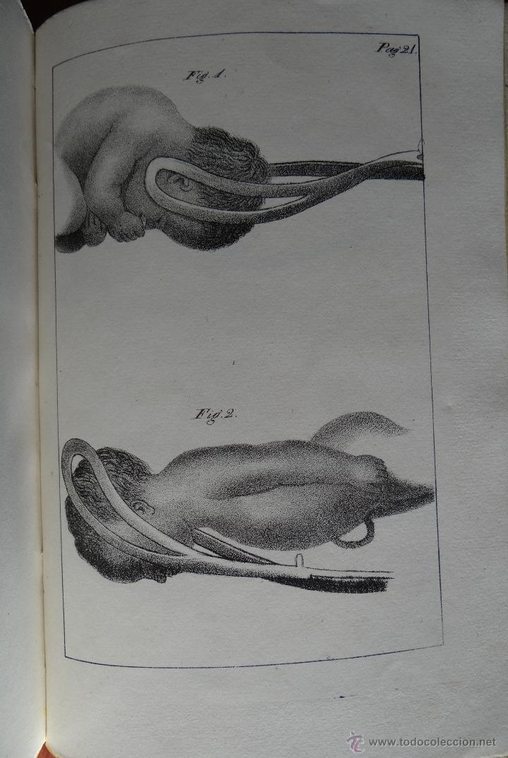 Libros antiguos: CURSO COMPLETO DE PARTOS POR JULIO HATIN . MADRID 1.835 (1ª EDICION) TOMO 1ºy2º. LITOGRAFIAS - Foto 11 - 49416557