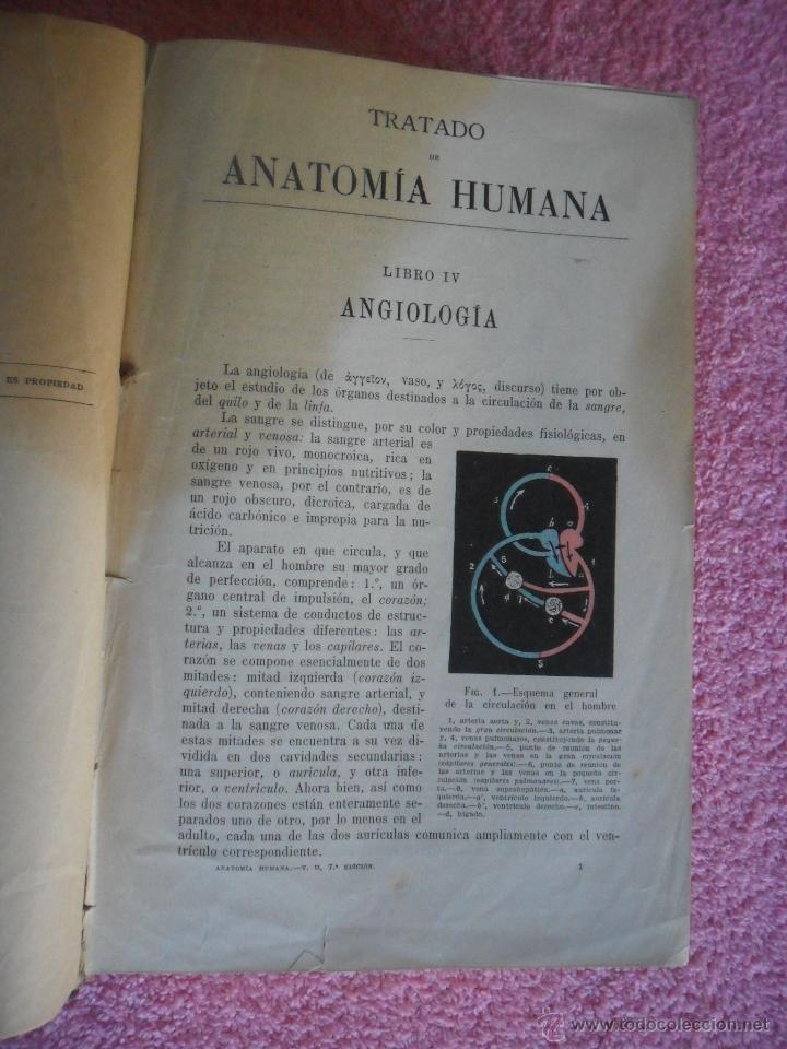 tratado de anatomía humana 2 l testut 1922 salv - Comprar Libros ...