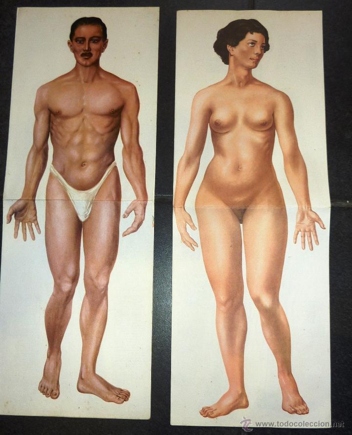 el cuerpo humano femenino y masculino triptico - Comprar Libros ...
