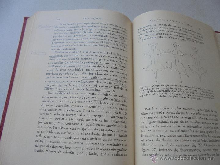 Libros antiguos: ELEMENTOS DE FISIOLOGÍA GENERAL J. MORROS SARDÁ-1931-MADRID-PRÓLOGO: G. MARAÑÓN - Foto 4 - 50518008