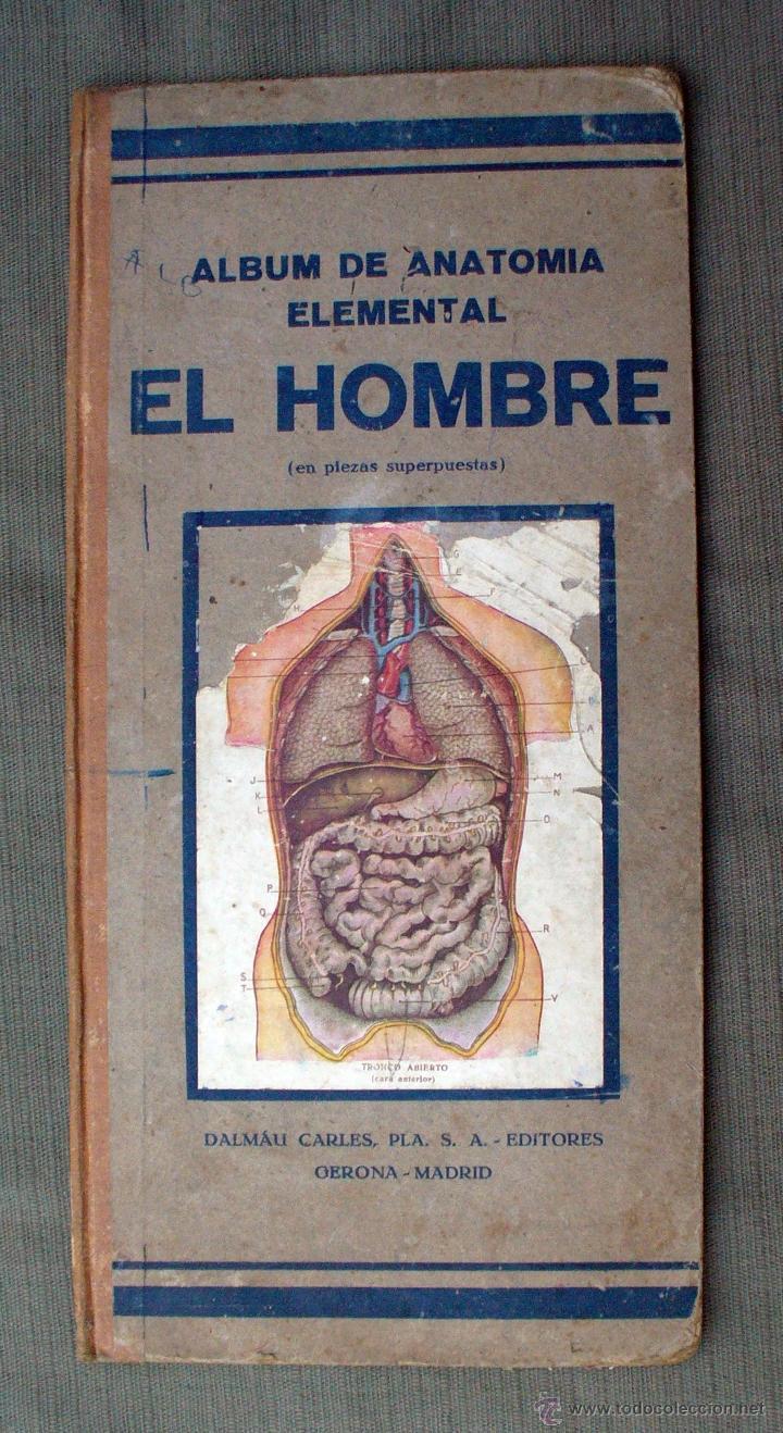 album de anatomia elemental el hombre, dalmau c - Comprar Libros ...