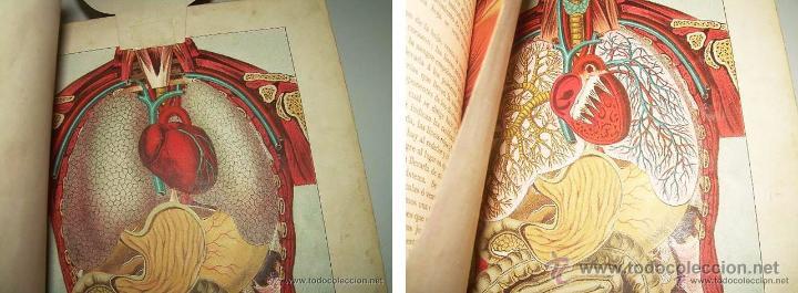 Libros antiguos: EL MEDICO PRACTICO Y DOMESTICO ENCICLOPEDIA DE MEDICINA,ENFERMEDADES DE LOS TROPICOS- AÑO 1.892 - Foto 7 - 53698021