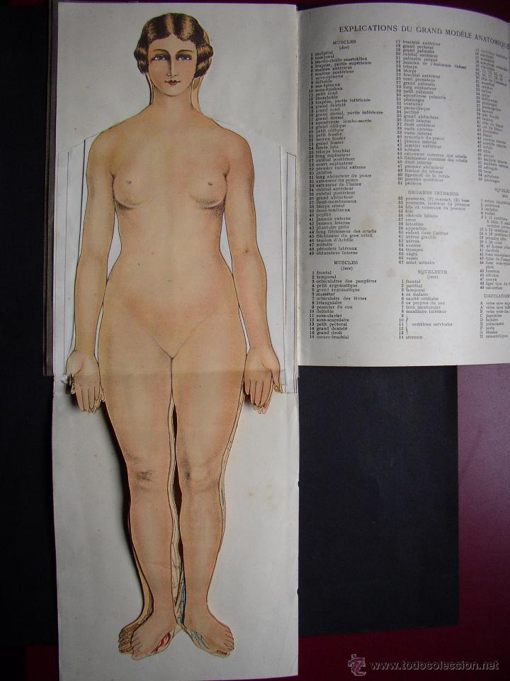 pop up anatomia , cuerpo femenino , año 1931 - Comprar Libros ...