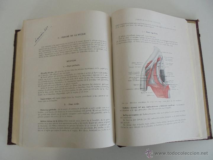 Libros antiguos: ANATOMIA HUMANA DESCRIPTIVA Y TOPOGRAFICA. H. ROUVIERE. TOMO I Y II. DEDICADO Y FIRMADO POR EL AUTOR - Foto 37 - 54045972