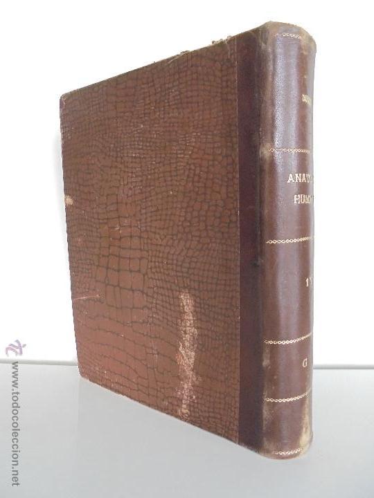 Libros antiguos: ANATOMIA HUMANA DESCRIPTIVA Y TOPOGRAFICA. H. ROUVIERE. TOMO I Y II. DEDICADO Y FIRMADO POR EL AUTOR - Foto 47 - 54045972