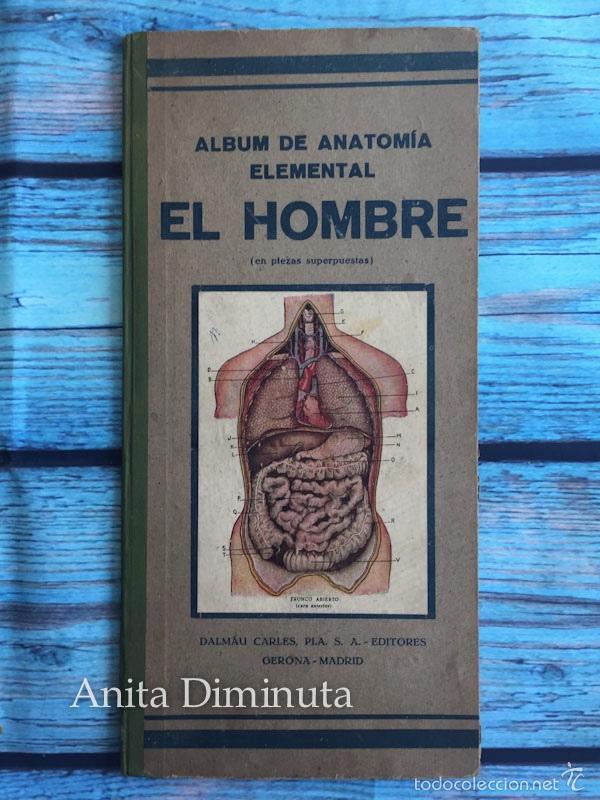 antiguo album de anatomia elemental - el hombre - Comprar Libros ...