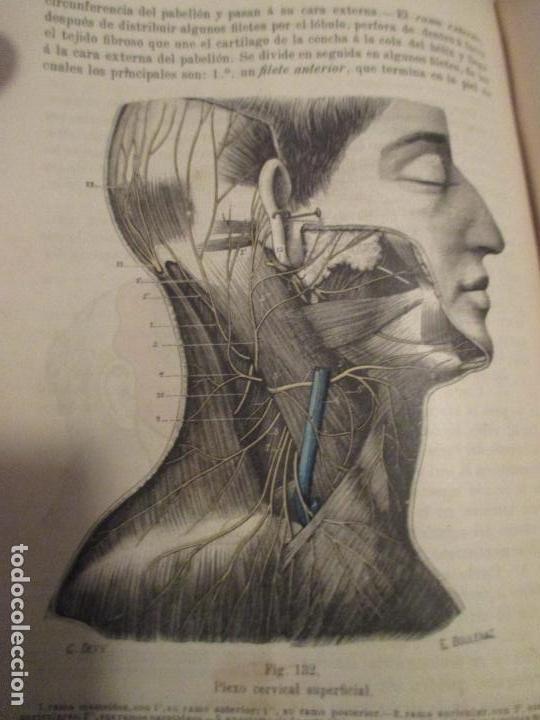 testut, l. \'tratado de anatomía humana\'. sistem - Comprar Libros ...