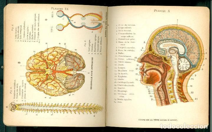 PETIT ATLAS D' HISTOIRE NATURELLE DE L' HOMME - 1920'S (Libros Antiguos, Raros y Curiosos - Ciencias, Manuales y Oficios - Medicina, Farmacia y Salud)