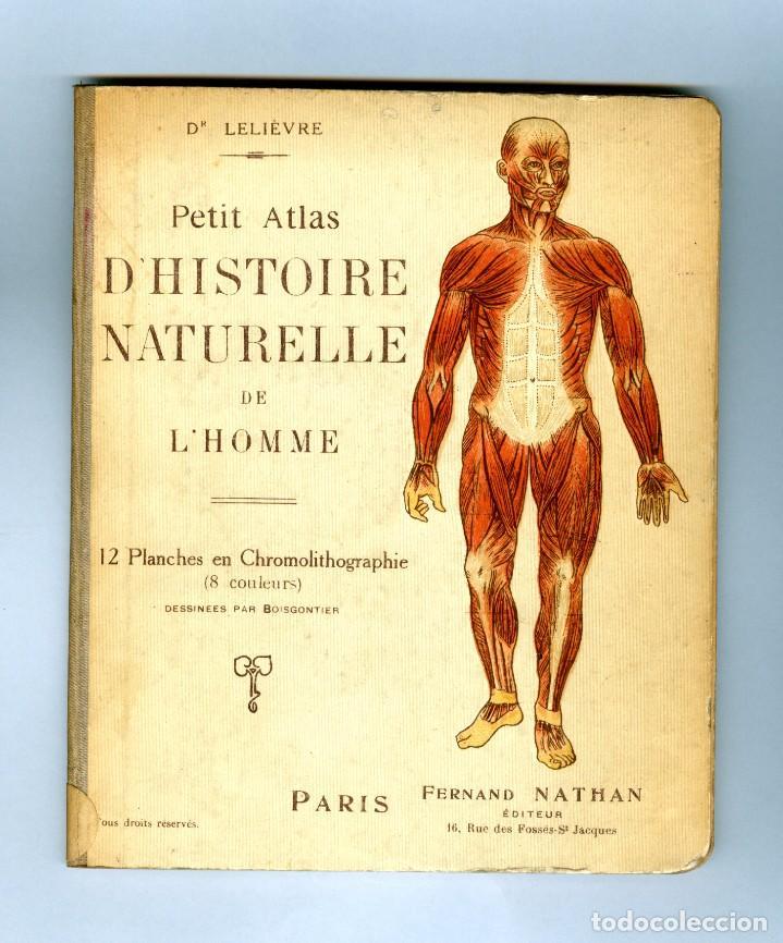 Libros antiguos: Petit atlas d' histoire naturelle de l' homme - 1920'S - Foto 2 - 95194035