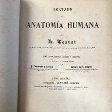 Libros antiguos: TESTUT. TRATADO DE ANATOMIA HUMANA. Lote 98215087