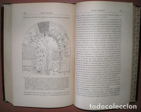 Libros antiguos: RAMON Y CAJAL, Santiago: ELEMENTOS DE HISTOLOGIA NORMAL Y DE TECNICA MICROGRAFICA. 1895 1ª edición - Foto 5 - 113677871