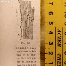 Libros antiguos: ANTIGUO GRABADO CUERPO HUMANO MEDICINA AÑO 1900 MEDICO CARDIOLOGO CARDIOLOGIA - CORAZON . Lote 115615367