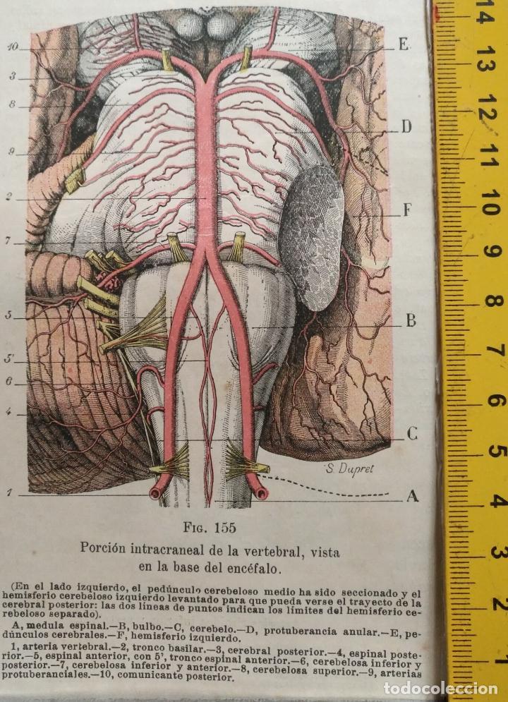 ANTIGUO GRABADO CUERPO HUMANO MEDICINA AÑO 1900 MEDICO - ENCEFALO CRANEO (Libros Antiguos, Raros y Curiosos - Ciencias, Manuales y Oficios - Medicina, Farmacia y Salud)