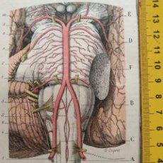 Libros antiguos: ANTIGUO GRABADO CUERPO HUMANO MEDICINA AÑO 1900 MEDICO - ENCEFALO CRANEO. Lote 115663183