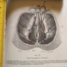 Libros antiguos: ANTIGUO GRABADO CUERPO HUMANO MEDICINA AÑO 1900 MEDICO - PERINE. Lote 115668315