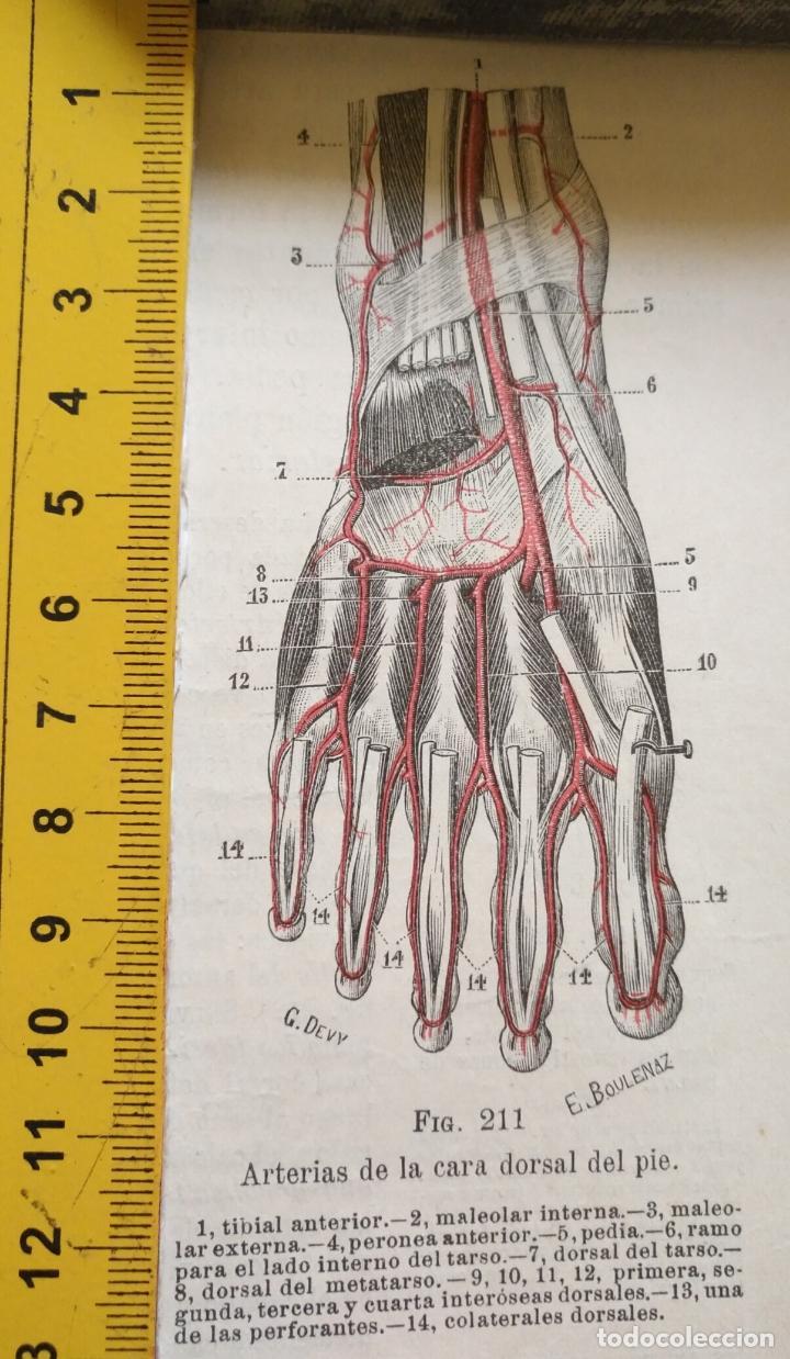 ANTIGUO GRABADO CUERPO HUMANO MEDICINA AÑO 1900 MEDICO - PIE (Libros Antiguos, Raros y Curiosos - Ciencias, Manuales y Oficios - Medicina, Farmacia y Salud)