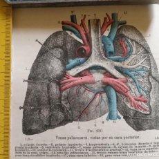 Libros antiguos: ANTIGUO GRABADO CUERPO HUMANO MEDICINA AÑO 1900 MEDICO - PULMONES. Lote 115672255