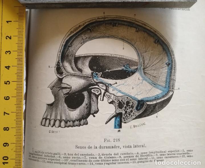 ANTIGUO GRABADO CUERPO HUMANO MEDICINA AÑO 1900 MEDICO - CABEZA (Libros Antiguos, Raros y Curiosos - Ciencias, Manuales y Oficios - Medicina, Farmacia y Salud)