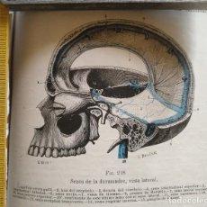 Libros antiguos: ANTIGUO GRABADO CUERPO HUMANO MEDICINA AÑO 1900 MEDICO - CABEZA. Lote 115673591