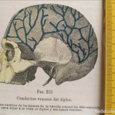 Libros antiguos: ANTIGUO GRABADO CUERPO HUMANO MEDICINA AÑO 1900 MEDICO - CABEZA. Lote 115678383