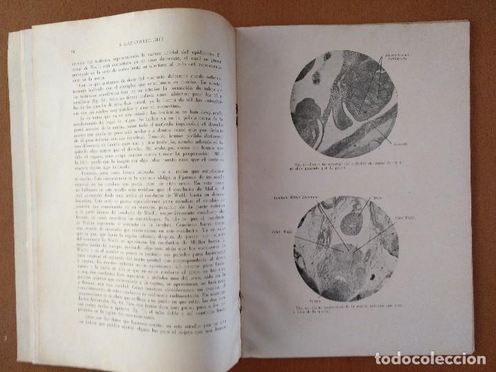 Libros antiguos: TESIS DOCTORAL MEDICINA DATOS EMBRIOLOGICOS TEORIA INTERSEXUAL DR. J. MAS COLLELLMIR 1930 - Foto 3 - 118993271