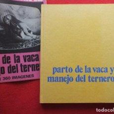 Libros antiguos: PARTO DE LA VACA Y MANEJO DEL TERNERO VETERINARIA PATOLOGIA VACAS TERNERA. Lote 120127371