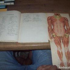 Libros antiguos: ATLAS ANATÓMICO.COLECCIÓN FIGURAS CLÁSICAS. GUSTAVO GILI,EDITOR. ARTURO CABALLERO. DESPLEGABLES. Lote 125529499