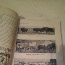 Libros antiguos: 1933 CURSO ZOOLOGÍA VERS. DE 131 EDICIÓN ALEMANA POR EL DR FRANCISCO PARDILLO. Lote 113401986
