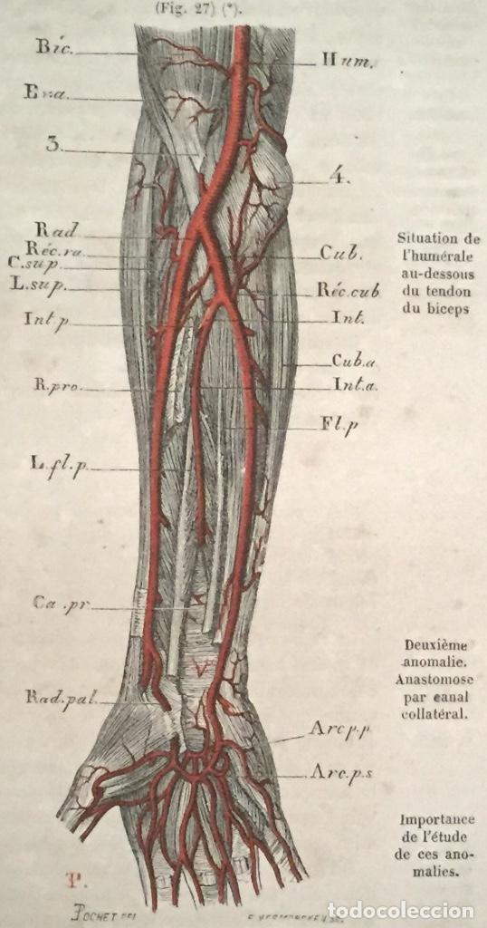 año 1867 - tratado de anatomía descriptiva - 73 - Comprar Libros ...