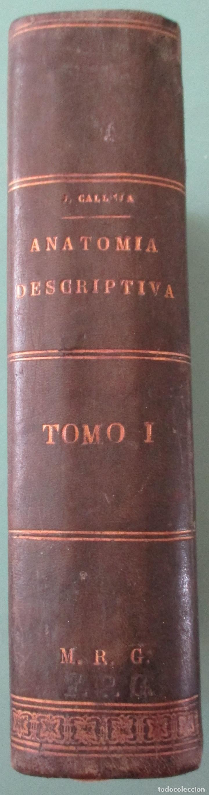 Libros antiguos: COMPENDIO DE ANATOMÍA DESCRIPTIVA EMBRIOLOGÍA HUMANAS. TOMO I. 4ª EDICIÓN. 1901. JULIAN CALLEJA - Foto 4 - 148646866