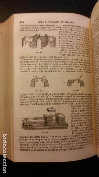 Libros antiguos: 1871 - BECLARD - Tratado elemental de fisiología humana - Foto 6 - 169682540