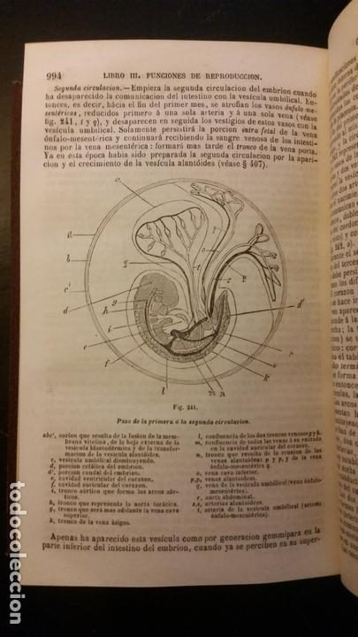 Libros antiguos: 1871 - BECLARD - Tratado elemental de fisiología humana - Foto 7 - 169682540