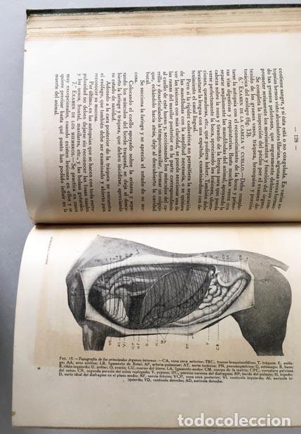 VETERINARIA FORENSE, MEDICINA LEGAL Y TOXICOLOGÍA. 1922. (ANIMALES. ENFERMEDADES. HIGIENE, (Libros Antiguos, Raros y Curiosos - Ciencias, Manuales y Oficios - Medicina, Farmacia y Salud)