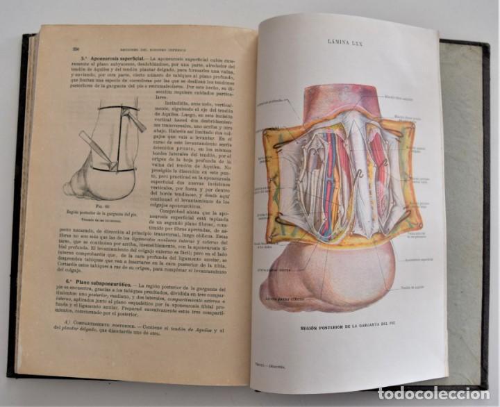 Libros antiguos: ATLAS DE DISECCIÓN POR REGIONES - TESTUT, JACOB Y BILLET - CASA EDITORIAL P. SALVAT 1921 - Foto 8 - 202398743