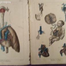 Libros antiguos: MEDICINA ANATOMIA RARO ORGANIZACION Y FISIOLOGIA DEL HOMBRE A.COMTE LAMINAS ANATOMICAS EXPLICATIVAS. Lote 204272838