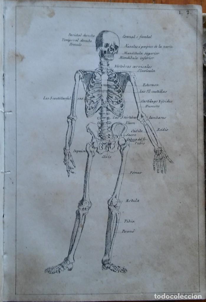 Libros antiguos: Instrucción del practicante. Madrid, 1863. 9 bonitas láminas litografiadas - Foto 5 - 211510994