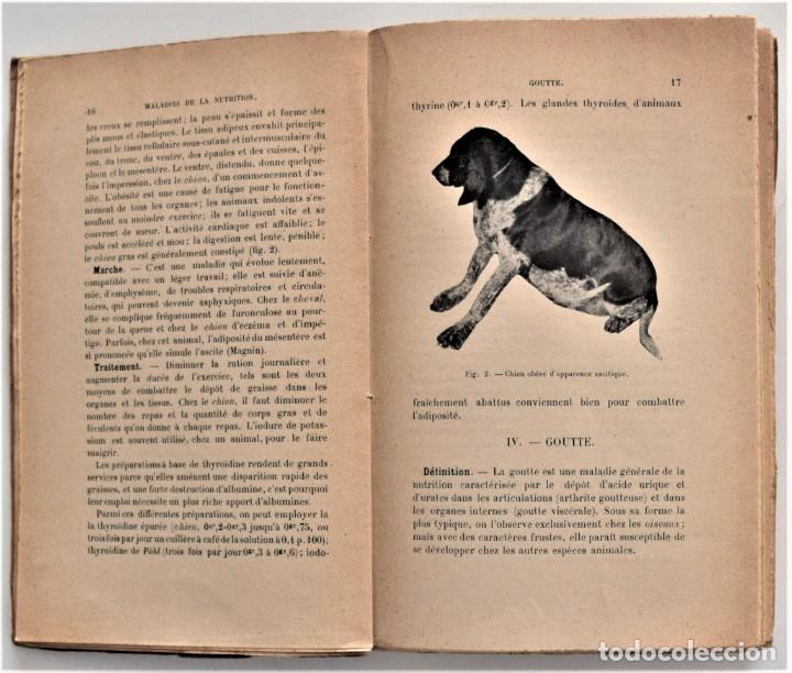 Libros antiguos: LOTE 4 TOMOS ENCICLOPEDIA CADÉAC DE VETERINARIA EDICIÓN FRANCESA AÑOS 1904 A 1914 - Foto 11 - 213962628