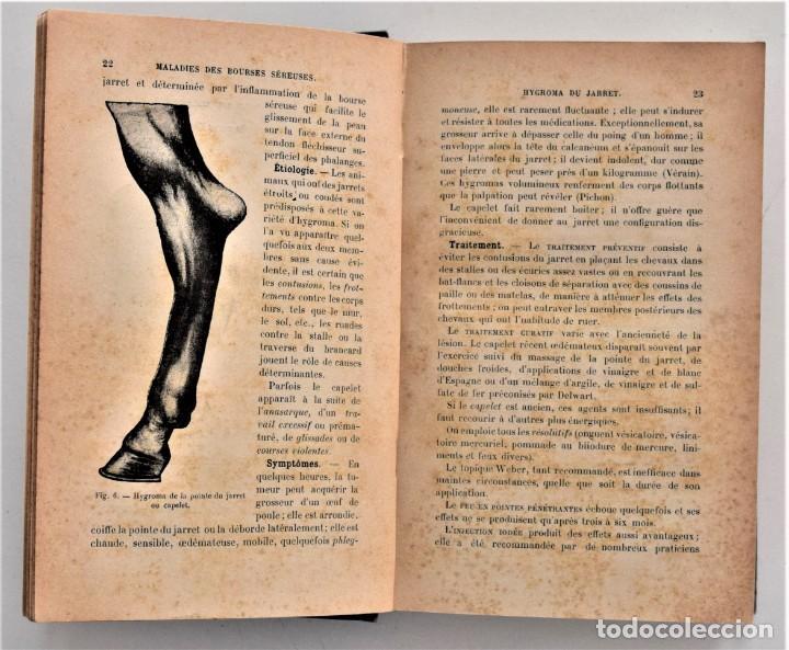 Libros antiguos: LOTE 4 TOMOS ENCICLOPEDIA CADÉAC DE VETERINARIA EDICIÓN FRANCESA AÑOS 1904 A 1914 - Foto 17 - 213962628