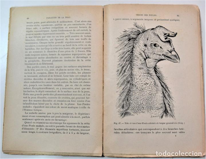 Libros antiguos: PARÁSITOS Y ENFERMEDADES PARASITARIAS DE LOS ANIMALES DOMÉTICOS - NEUMANN - EN FRANCÉS - PARÍS 1909 - Foto 5 - 214992925